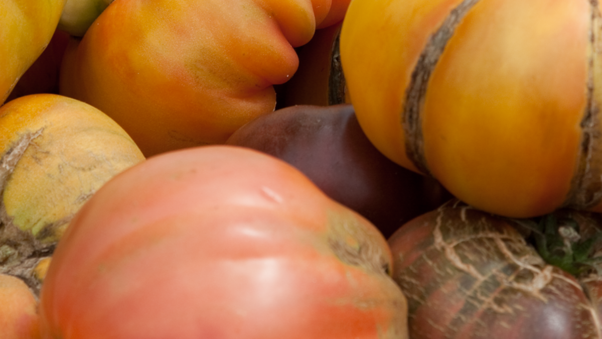 slider-tomates
